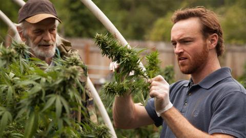 Marijuana: America illegale