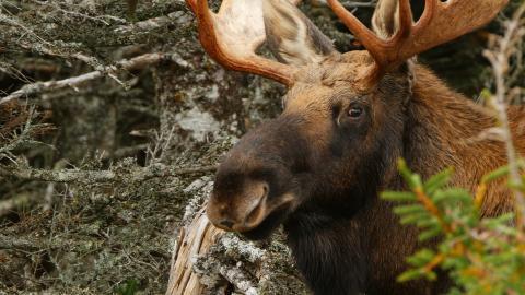 Natura selvaggia Canada