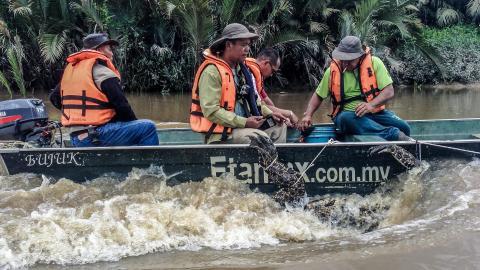 Borneo: paradiso da proteggere