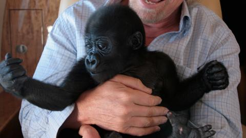 A lezione dai gorilla